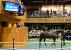 Saratoga Sale 2012: Day 1 Wrap