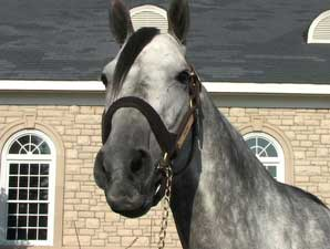 Past Ky Derby Winners: Giacomo (Video)