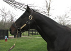 Past Ky Derby Winners: Grindstone (Video)