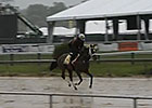Preakness News Update for May 16, 2014