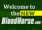 BloodHorse.com New Navigation Tour