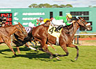 Talented Older Females Set for Turf Mile