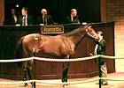 Japanese Buyers Boost Barretts 2YO Sale