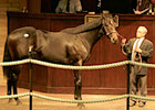 Bertrando Colt Tops at Barretts Yearling Sale