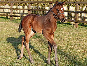 Euro Sprinter Bated Breath Sires First Foal