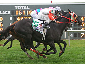 Ben's Cat Aims for Third Turf Monster Win