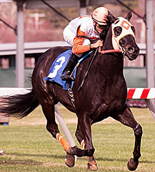 Ben's Cat Wins Fifth Straight Mister Diz