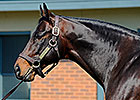 Bernardini Making Headway Down Under