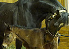 Rachel Alexandra Delivers Bernardini Filly