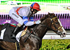 Filly Takes on the Boys in Singapore Classic