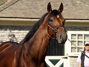 Big Brown Represented by First Foal