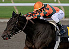 Biofuel a 23-1 Winner in Woodbine's Mazarine
