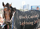 Black Caviar Inducted Into Australian HOF