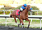 Hollendorfer Runners 1-2-3 in Native Diver