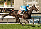 Bolo Trains for SA Derby, 'Pharoah' Back