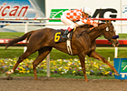 Smooth Bayakoa Win for Speedy Briecat