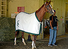SKECHERS Has California Chrome Sponsorship
