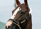 California Chrome Draws Post 5 in Derby