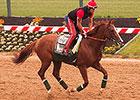 California Chrome Has First Gallop at Pimlico
