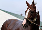 California Chrome Big Favorite in Oaks-Derby