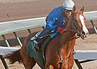 California Chrome Boasts Strong Foundation
