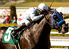 Calimonco Retired, to Stand at Ballena Vista