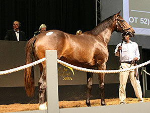 Giant's Causeway Filly Co-Topper at Cape Sale