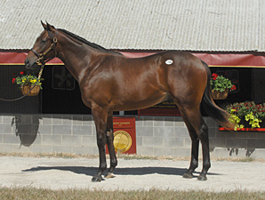 Castaway Got Better and Better As a Yearling