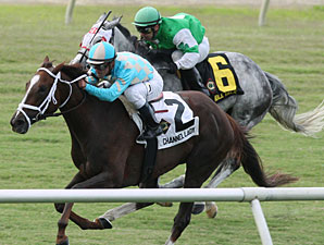 Channel Lady Proves Best in All Along Stakes