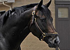 Grade III Winner Chelokee Dies in Arizona