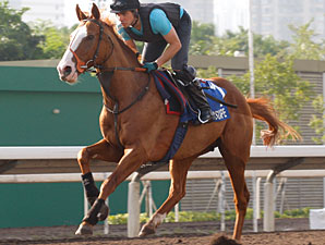 No Luck of the Draw in HK for Juddmonte