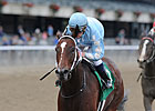 Cluster of Stars Named NY Horse of the Year