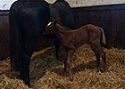 Dam of Shared Belief Produces Filly
