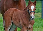Cowtown Cat's First Foal Is a Colt