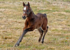 Slideshow: Curlin's First Foal