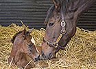 First Foal for Arc Winner Danedream