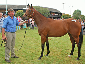 Galileo Yearling Filly Stars at Deauville