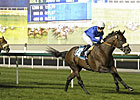 Longshot Do It All Wires Zabeel Mile