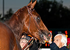Baffert: Dortmund is 'Figuring it Out'