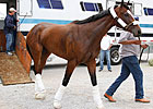 KY Oaks Contenders Arrive at Churchill