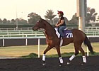 Dubai Carnival: March 6 Training