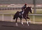 Dubai Carnival: March 7 Training