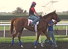 Dubai World Cup: Training 03/26/13 Part II