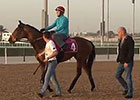 Dubai Wold Cup 2015: Trackwork March 27