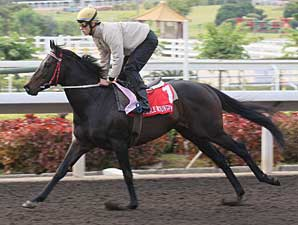 Eagle Mountain Works For Hong Kong Cup