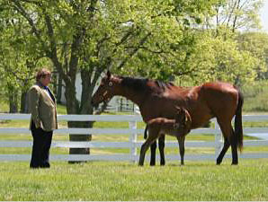 Prominent Breeder-Owner Edward Evans Dies