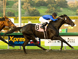 Stronach Stables buys grade I winner Einstein