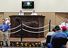 $140,000 Colt Tops Louisiana Yearling Auction