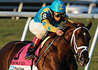 Judge Favors Zayat in Latest Legal Round