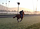 Breeders' Cup - Europeans Gallop on the Grass